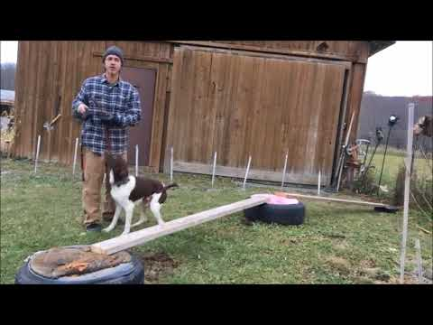 Xxx Mp4 Puppy Australian Shepherd Vs Adult German Shorthaired Pointer NYC Dog Training 3gp Sex