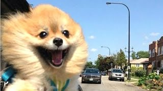 Funny Dogs - A Funny Dog Videos Compilation 2016 || NEW HD