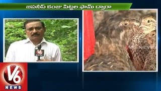 Techniques for Poultry Farming l Japanese Quail Birds  | V6 News