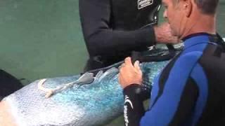 JMB FX Studio -  Aquamarine