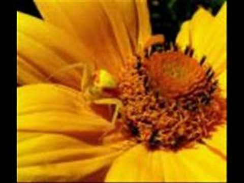 سورة العنكبوت - للشيخ الحبيب ماهر المعيقلي1_Beautiful Quran