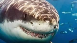 Trilha sonora do filme tubarão : um clássico do cinema