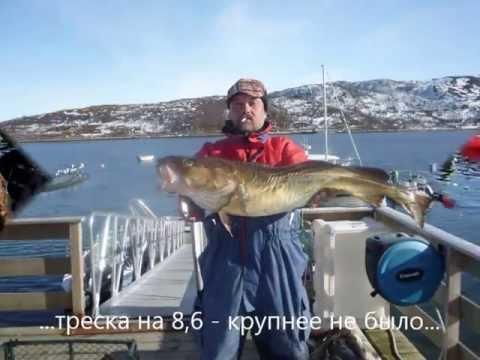 рыбалка на шпицбергене видео