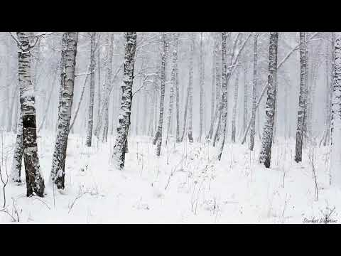 Snowstorm in the Forest | Winter Blizzard Sounds for Sleep & Relaxation | Natural White Noise Sounds