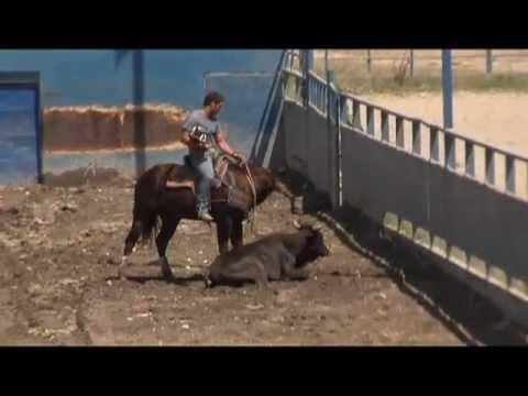 El Perro Coleando Mérida Venezuela