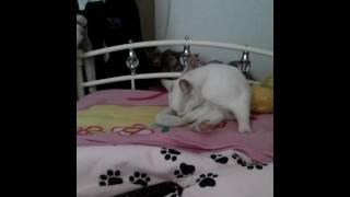Maise cat lick  xxx