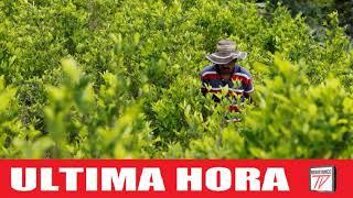 Los Inversores apuestan por Colombia en cultivo mundial de droga