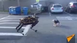 Robot Dog and original Dog