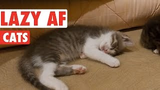 Hilarious Lazy Cats Video Compilation