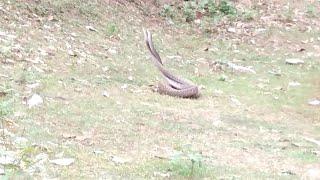 সাহারপুর ছাতীয়ান মোড় নাগেশ্বরপুরের নাগ নাগিনী