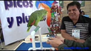 Parrot Training Workshop with Barbara Heidenreich in Puebla, Mexico