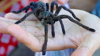 WHAT DOES A DEEP FRIED SPIDER TASTE LIKE? Eating a giant tarantula in Cambodia