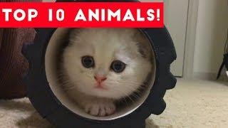 Top Ten Funny/Cute Pet Videos of August Part 4