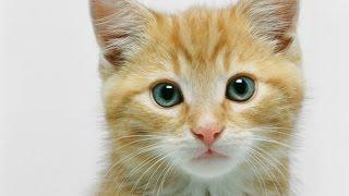 إياك أن تقبل القطط أو الكلاب , لهذه الأسباب .. !!