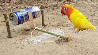 Creative Unique Parrot Bird Trap | Using Energy Drink Can |