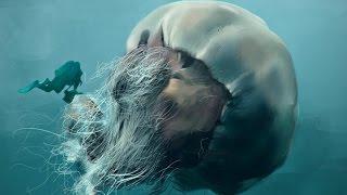 اعرف اكثر| قنديل البحر - احد اخطر الكائنات البحرية!