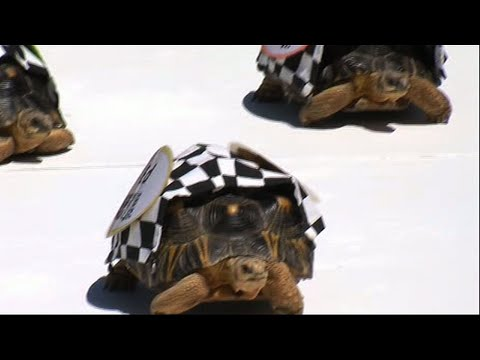 Xxx Mp4 Tortoises Race In The Zoopolis 500 3gp Sex