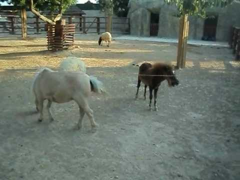 Xxx Mp4 Limassol Zoo Ponies Xxx 3gp Sex