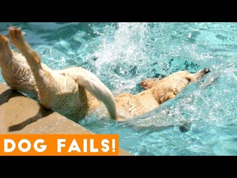 Xxx Mp4 Funniest Dog Fail Compilation 2018 Funny Pet Videos 3gp Sex