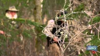 Bush Man Piles | Alaska Monsters