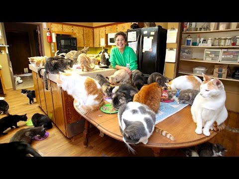 Xxx Mp4 Ultimate Cat Lady Woman Shares Her Home With 1 100 Felines 3gp Sex