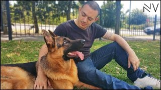 A Day With A German Shepherd Puppy | NerdVlog