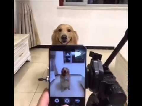 Xxx Mp4 Dog Snap 3gp Funny Videos Com 3gp Sex
