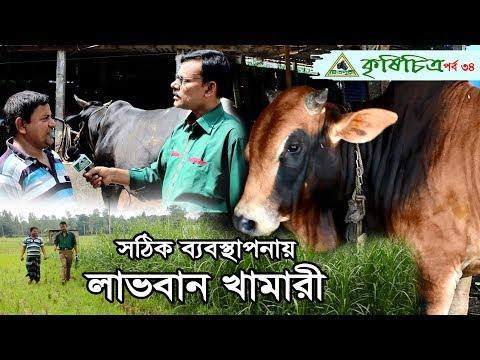 Xxx Mp4 Cow Farming In Bangladesh একজন সফল খামারীর গল্প। 3gp Sex