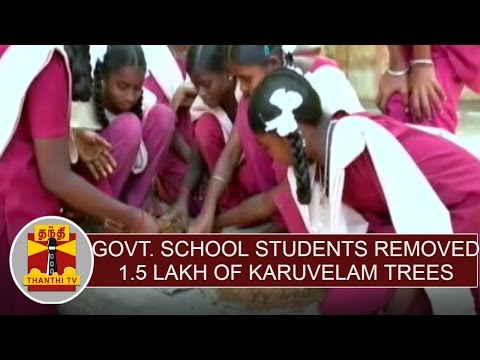 Govt.School Students removed 1.5 lakh Karuvelam trees at Manapparai