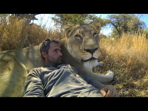 GoPro Lions The New Endangered Species
