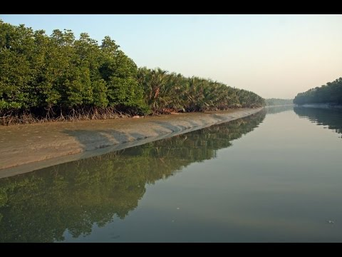 Xxx Mp4 Sundarban Is Beautiful Places Bangladesh সুন্দরবন বাংলাদেশের সুন্দর স্থান হয় 3gp Sex