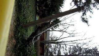 Rip tree out of the ground using only hand tools. No truck involved! Part 2