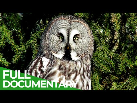 The Baltic Coast Wild Animal Paradise Free Documentary Nature