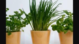 Growing Herbs for Beginners -Module 1 History of Herbs