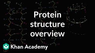 Overview of protein structure   Macromolecules   Biology   Khan Academy