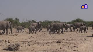 Botswana  Elephants in the mud in  Chobe National Park