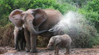 Elephant Spraying Water   FREE JIGSAW PUZZLE DOWNLOAD   ALL HD IMAGES