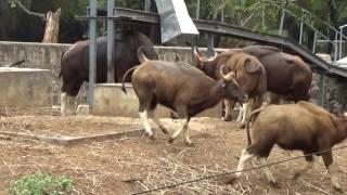 Vandaloor Zoo, Chennai