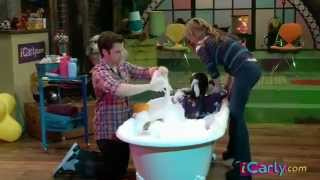 iCarly iBathe It A Cat with Ariana Grande