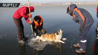 Poor Puppy! Rescuers pull helpless dog from frozen lake in Siberia