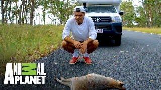 ¡Peligro, animales en el camino! | Wild Frank: Tras la evolución de las especies | Animal Planet