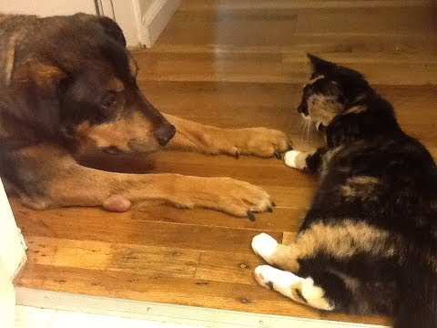 Xxx Mp4 Cat Has The Most Heartbreaking Reaction After The Family Dog Passes Away From Cancer 3gp Sex