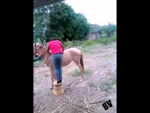 Caída graciosa mujer se quiere subir a caballo risa