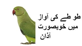 parrot speaking azaan 00923459442750 Zain Ali farming in Pakistan