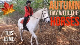 Autumn/Fall Day with the Horses and Donkeys | This Esme