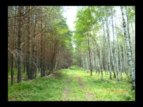 nature.природа.mv.screamer-defolation