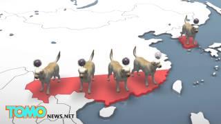 美國中西部爆發亞洲犬流感 數千狗遭感染