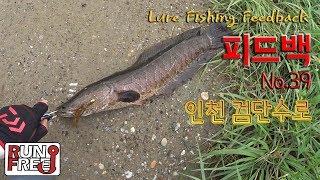 [피드백 39화] 인천 검단수로 '가물치 형;;' Bass Lure Fishing