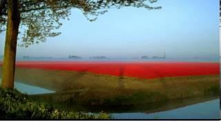費玉清 - 晚安曲(鋼琴獨奏)