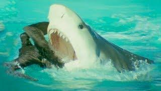 Bird Vs Shark | Trials Of Life | BBC Earth